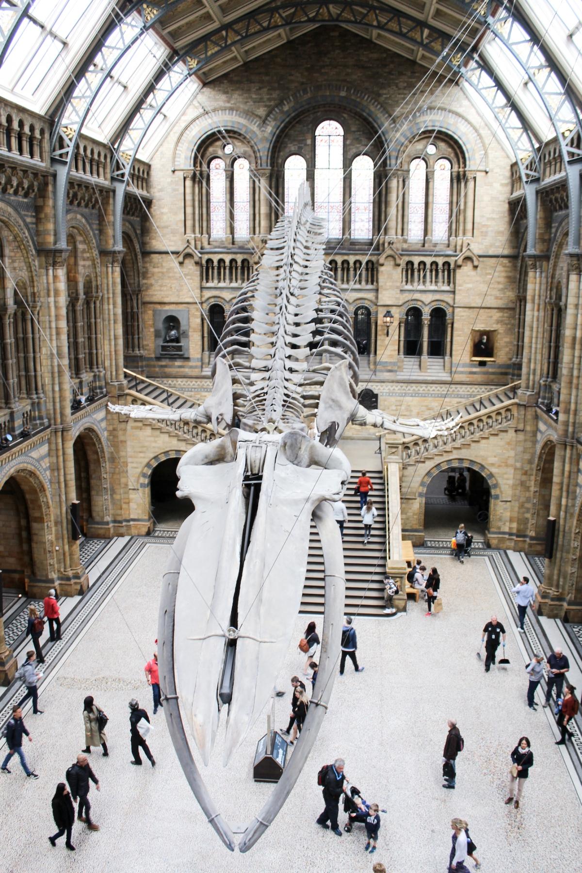 London Natural History Museum, South Kensington, museum, London, United Kingdom